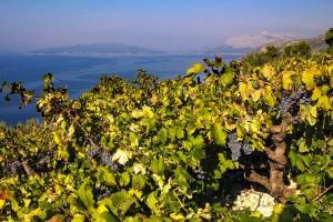 suvaljko-vino-ulje-17